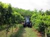 azienda_agricola3