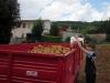 raccolta_patate_3